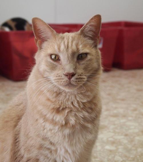 Blind Cat Rescue Watch Us