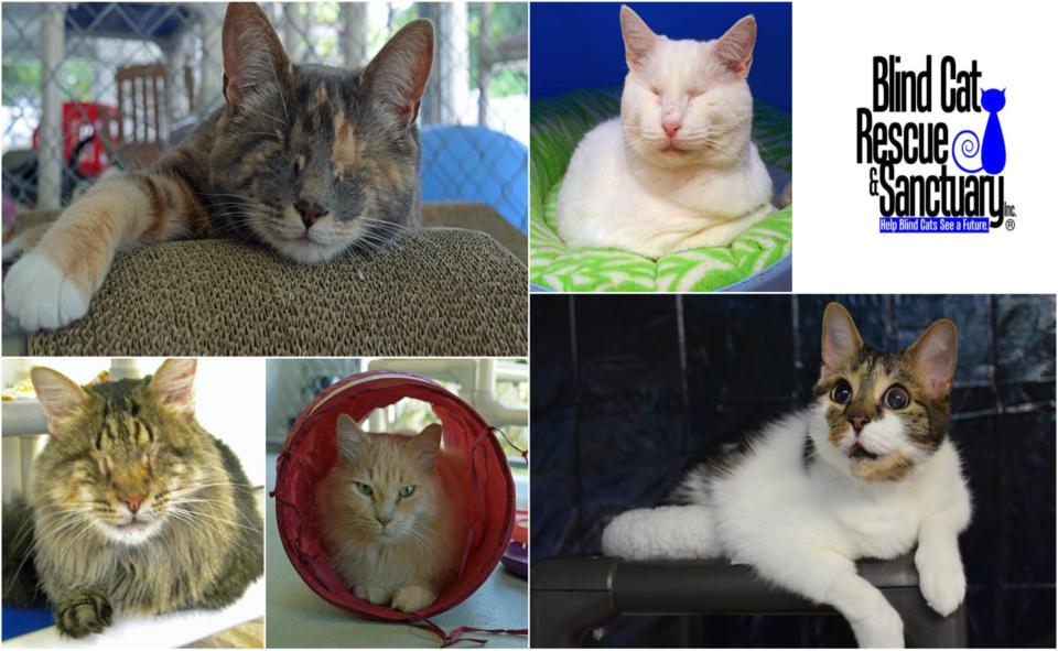 Blind Cat Rescue & Sanctuary .